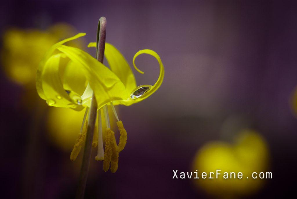 _XFV0012