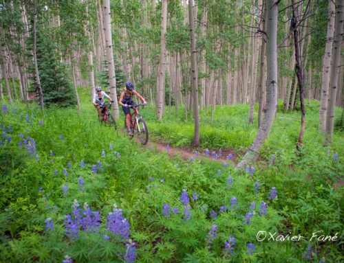 July is the time for Wildflowers in Crested Butte!